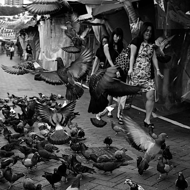 Two Mostly Free Days in Singapore pigeons